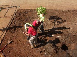 planting-a-tree-dd